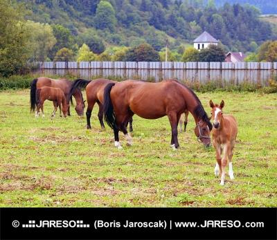 Много лошадей, пасущихся в загоне