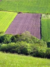 Зеленый луг и поле