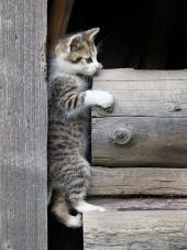 Полосатый котенок забирается на  деревянные бревна