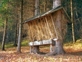 Feeder prepared for animals in Slovak forest