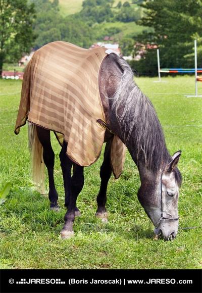 Häst betar i fältet