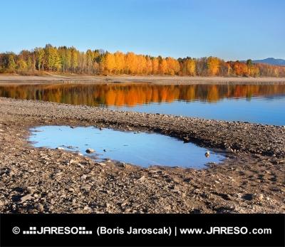 Reflektion av träd i Liptovska Mara under hösten i Slovakien