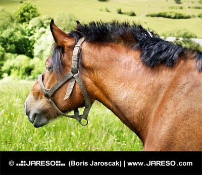Porträtt av häst