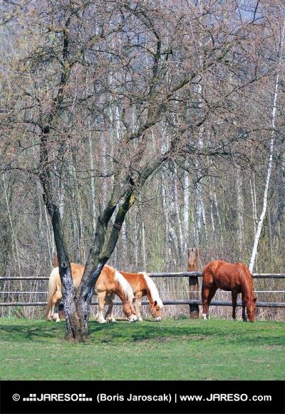 Häst på bete i området