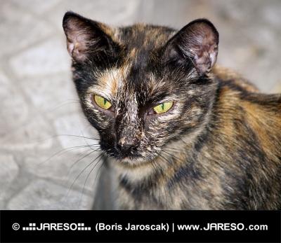 Porträtt av en fläckig herrelös katt