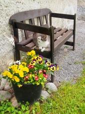 Katt vilar p? bänk utomhus