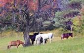 Hästar betar i fältet