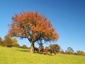 Hästar under träd vid sen kväll