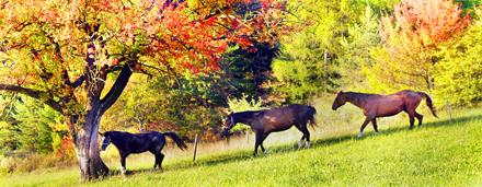 Katalog z ročno izbranimi fotografijami divjih in domačih živali, kot so fotografije konjev, krav, mačk, psov in insektov