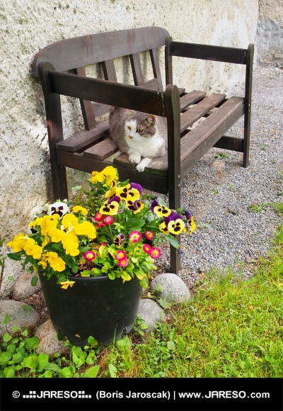 Mačka počiva na klopi na prostem