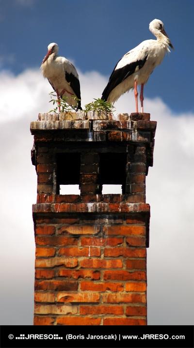 Dve beli štorkelj na dimniku od blizu