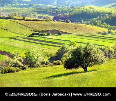 Travniki v času zgodnjega jutra