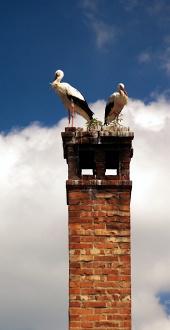 Dve beli štorkelj na dimniku