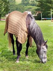 Odelo za konja z pase na poligonu