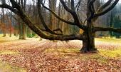Masivna starodavna drevesa v parku