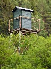 Gledam stolp v globokem gozdu