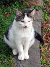 luštna mačka