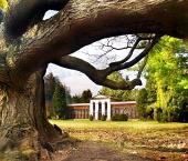 Massive drevo v parku in arboretum