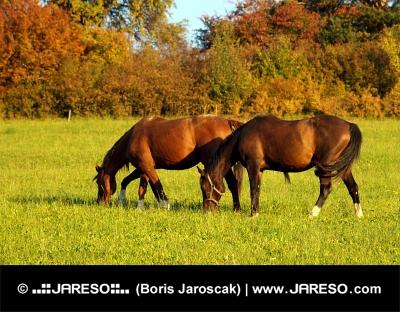 Two horses at sundown