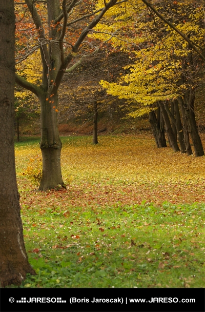 Park in autumn with leaves under the trees