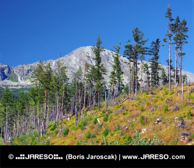 Damaged forest in High Tatra mountains