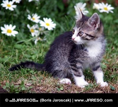Kitten on green field