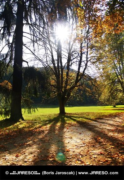Sun and autumn trees