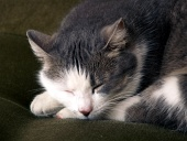 Detail of black and white cat sleeping on the couch