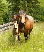 Horses and foal on green meadow