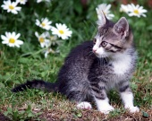 Kitten on green field