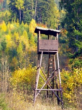 Forest hunting stand