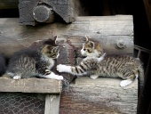 Kittens playing on stacked wood